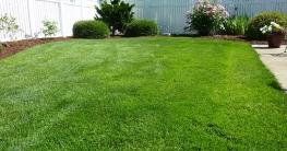 Mulchmähen für einen gesunden Rasen
